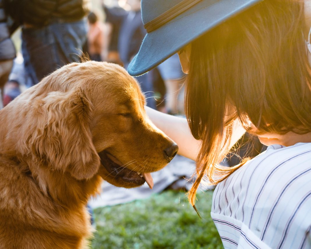 Can pets spread the coronavirus?
