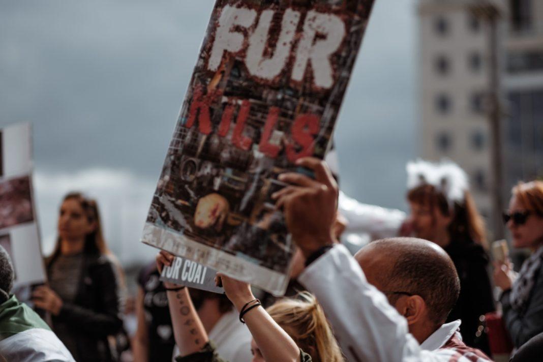 wales fur ban