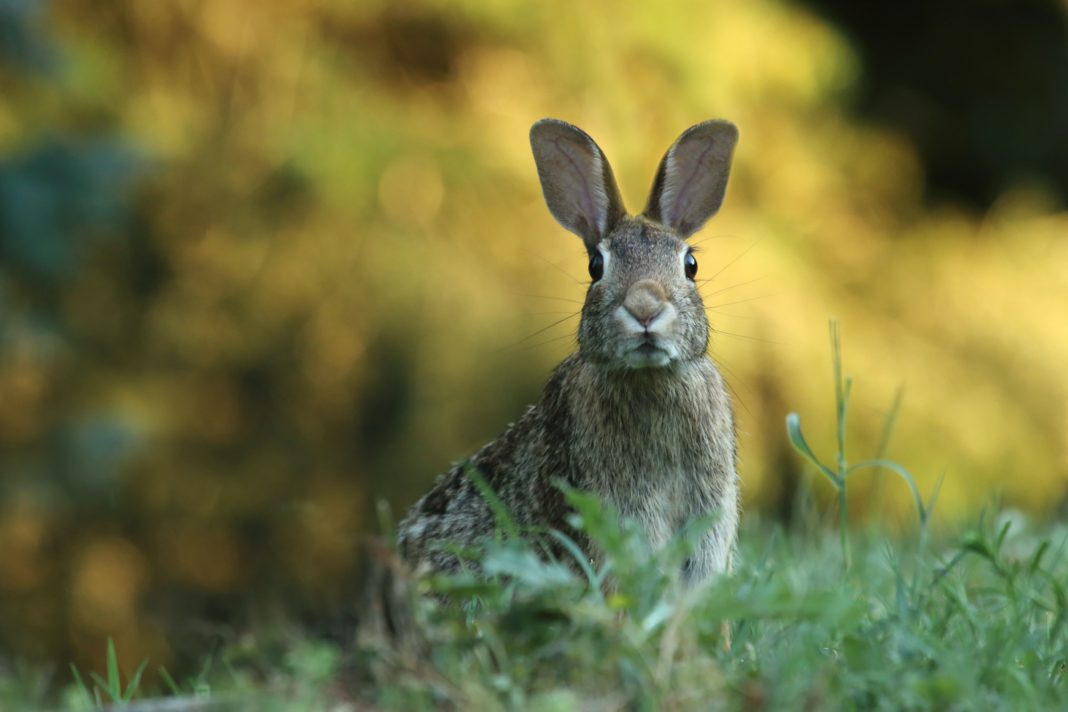 animal testing cosmetics ban