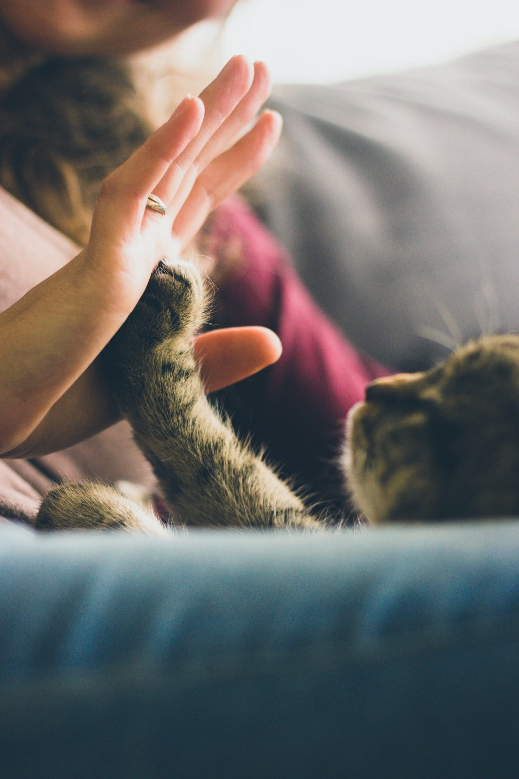 can my pet be vegan?