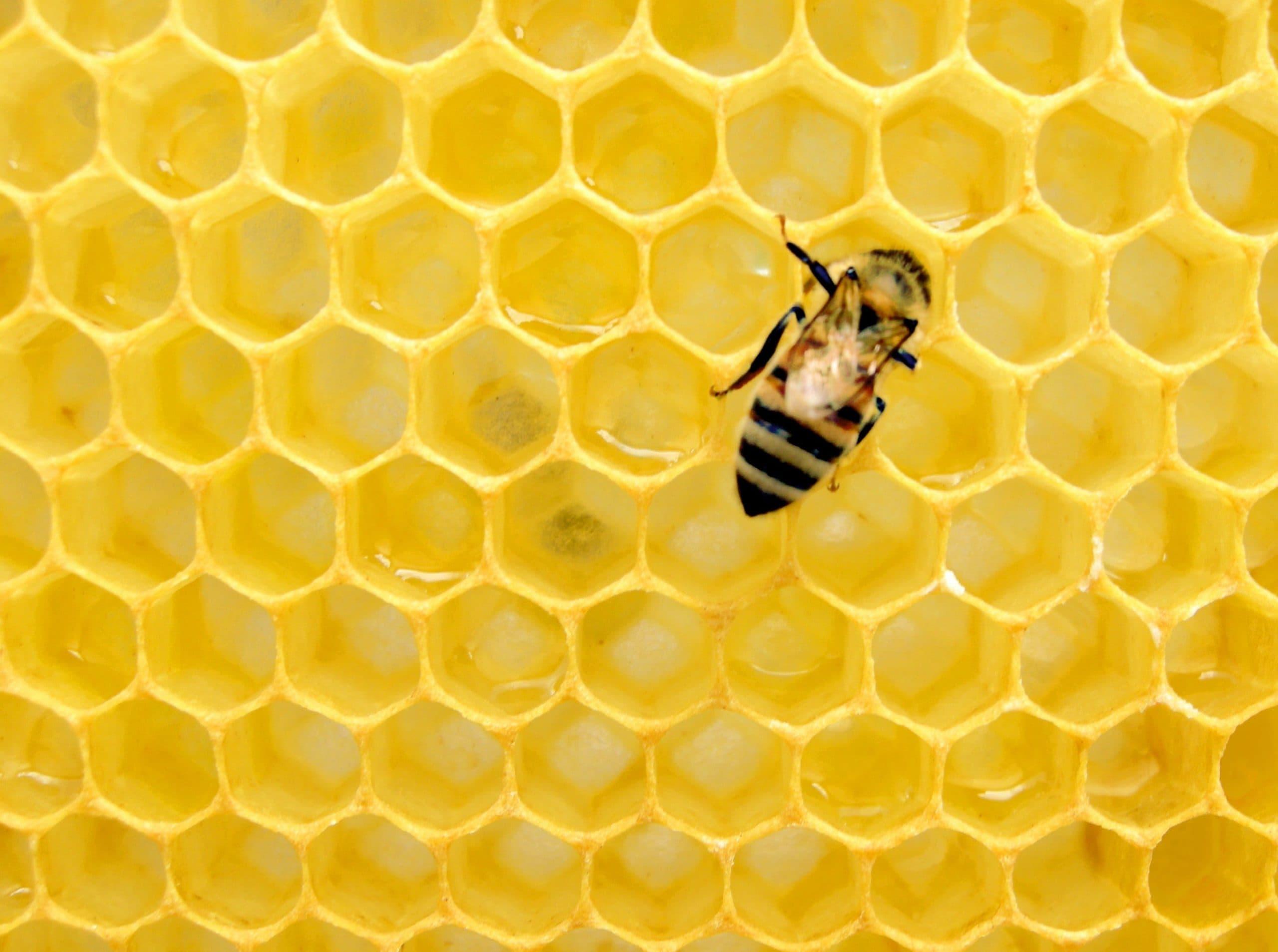 is beekeeping vegan and sustainable?