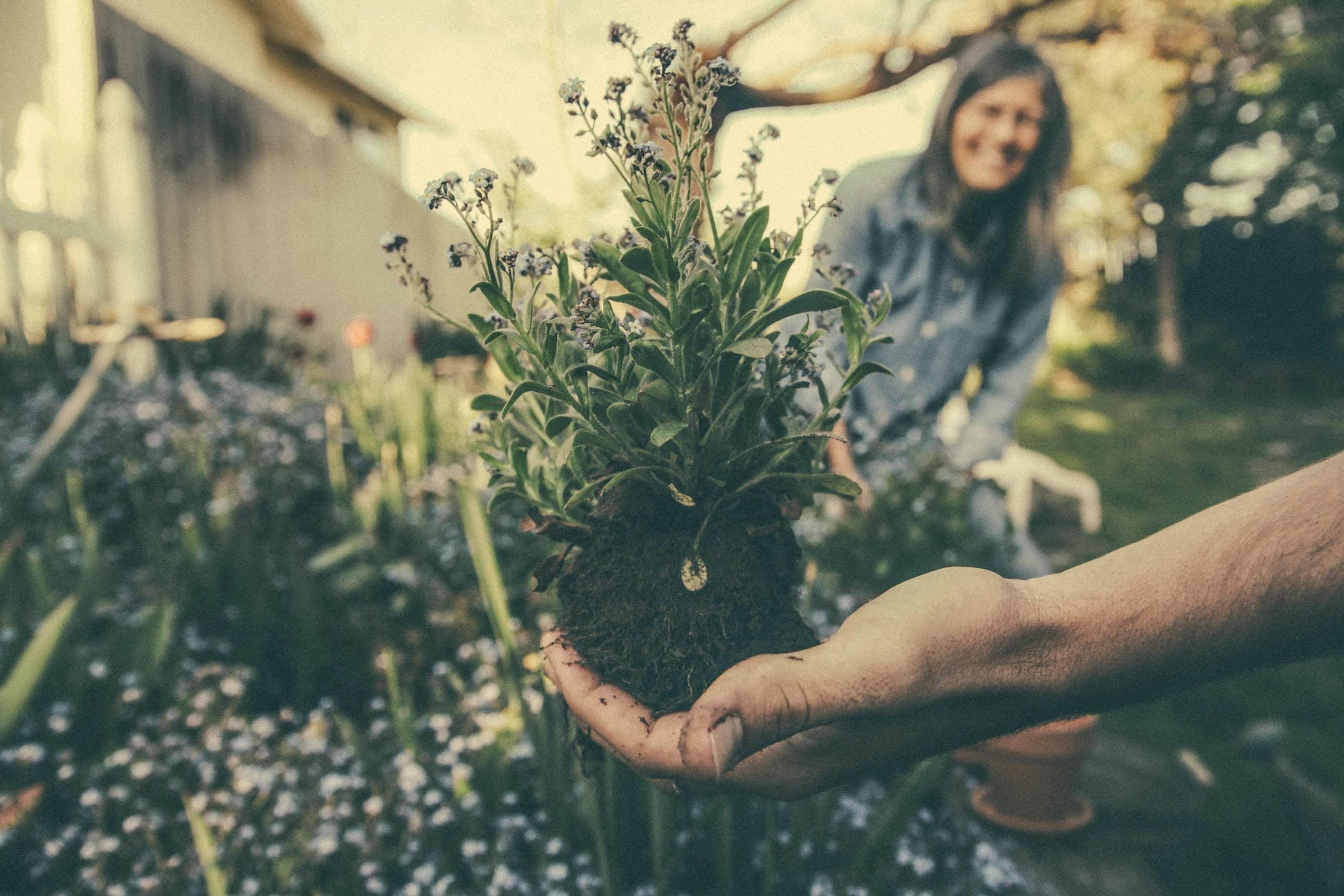 is gardening vegan?