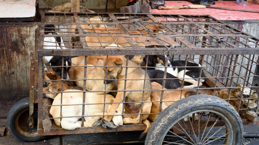 Trading And Sale Of Dog Meat