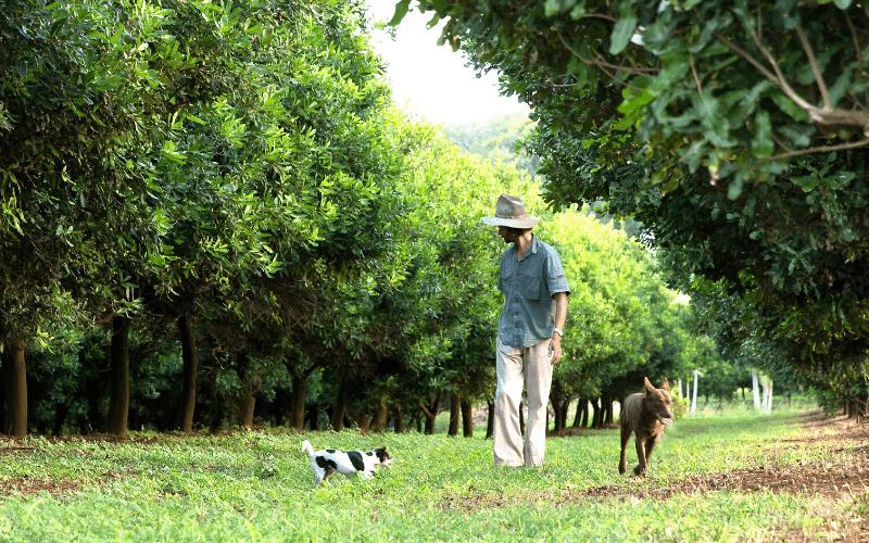 milkadamia - Jindilli farm
