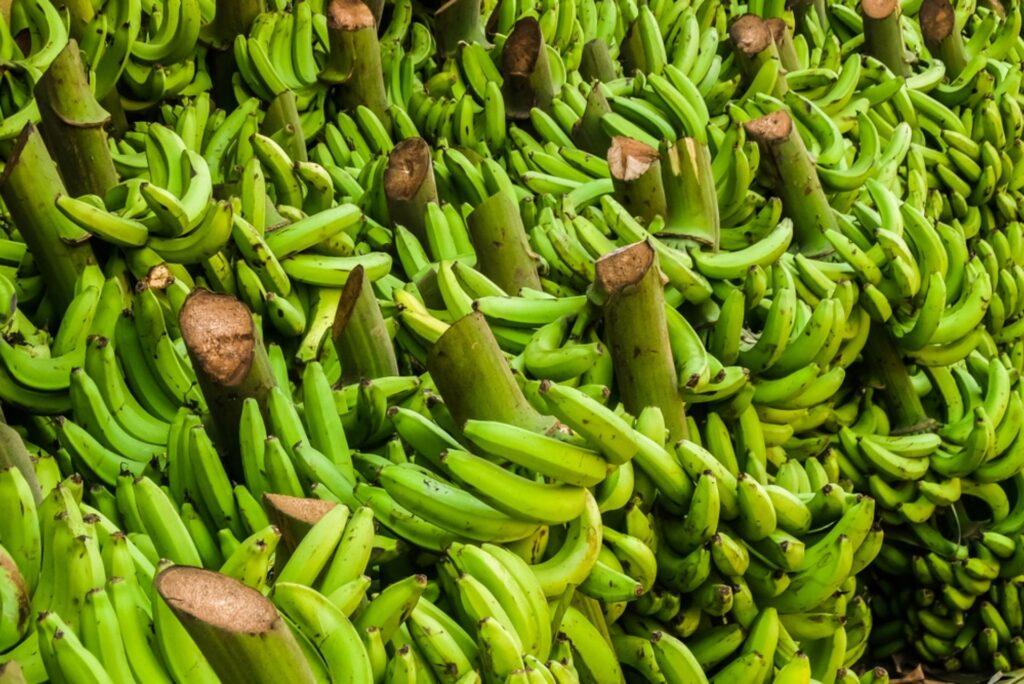 south india bananas