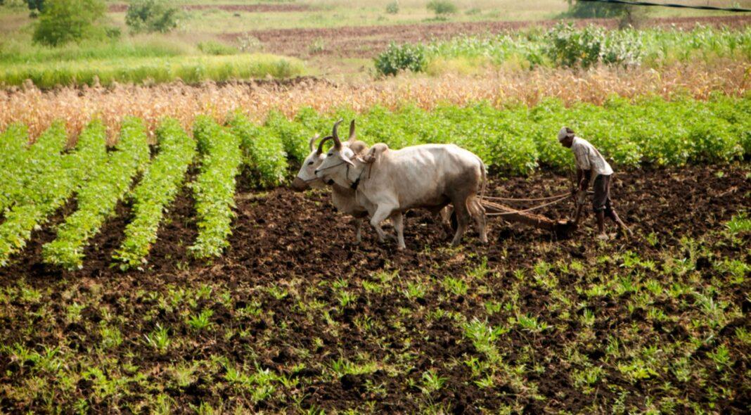 cattle farming india