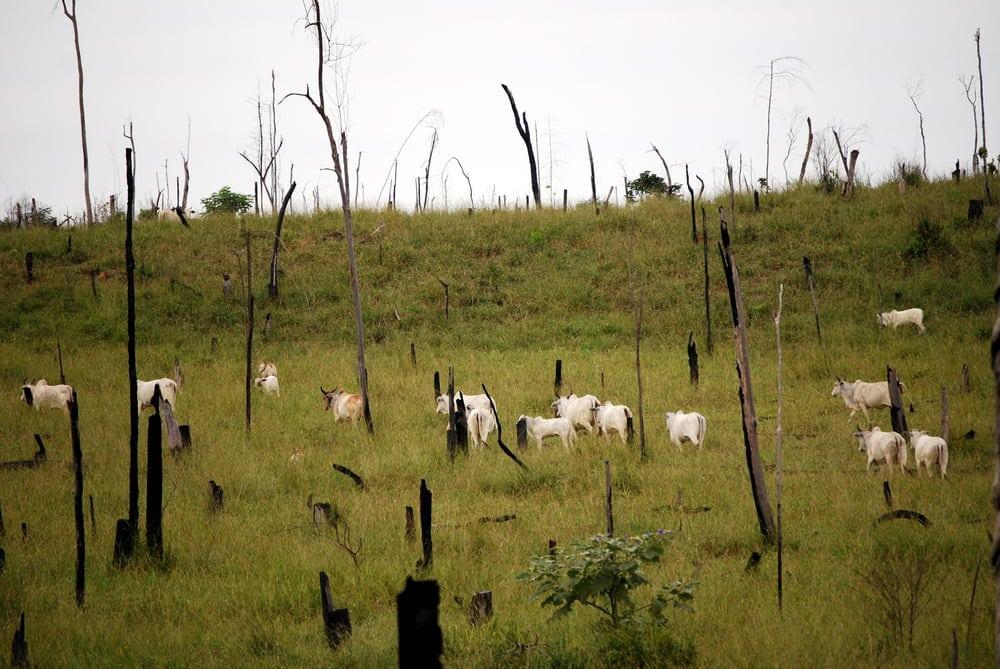 brazil beef boycott