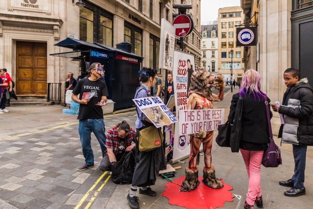 vegan extremism