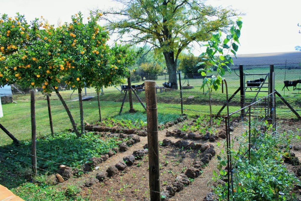 transitional farming