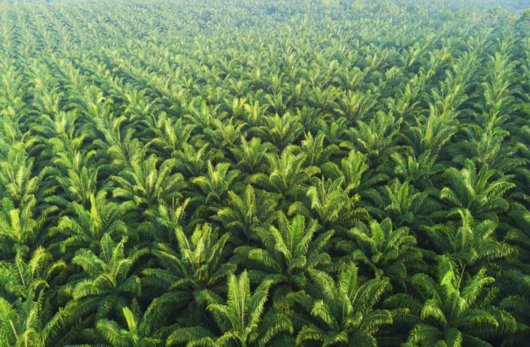 is palm oil vegan