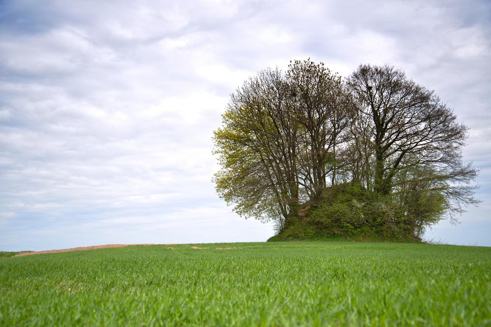 eco friendly burials