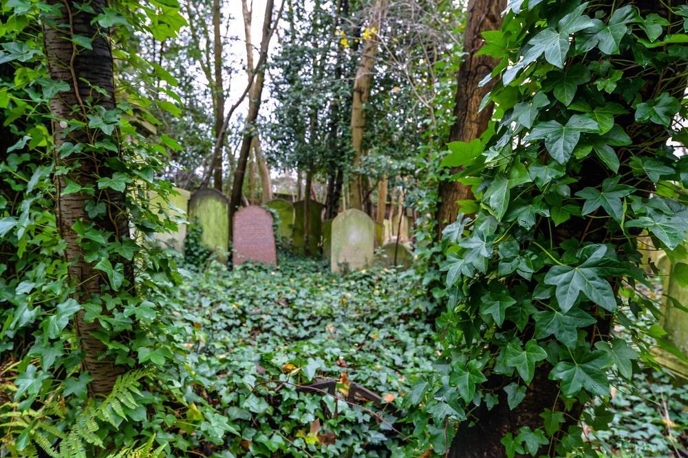 green burials uk