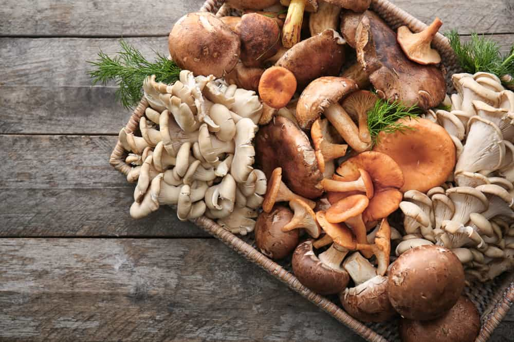 mushroom uses