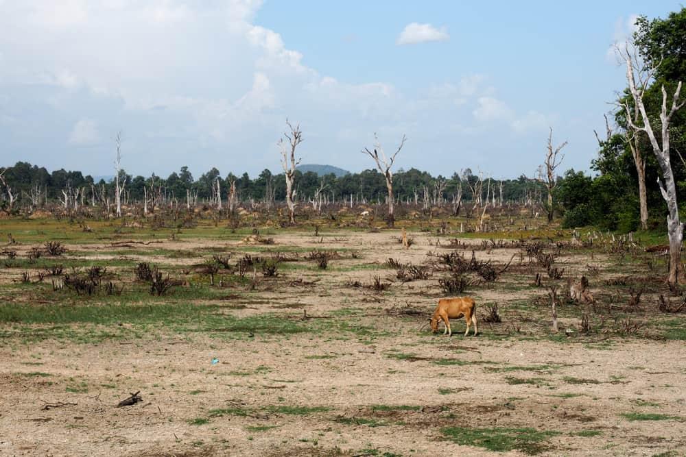 deforestation animal agriculture