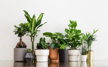 house plants sustainability