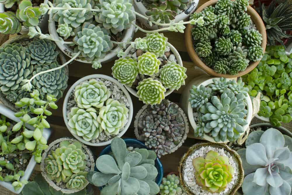 house plants environmentally friendly