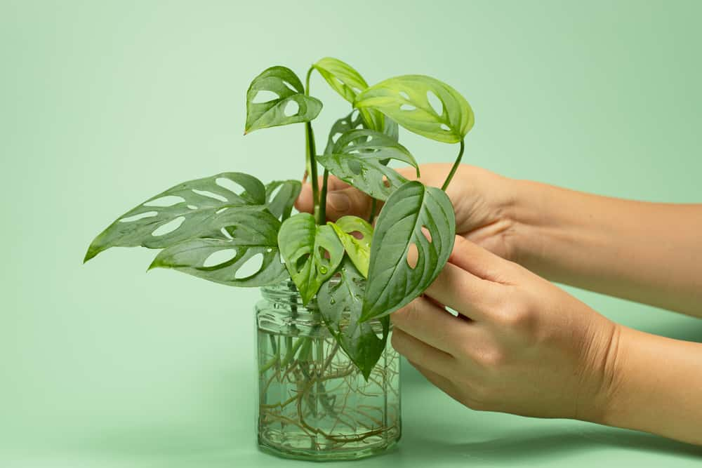 sustainable house plants