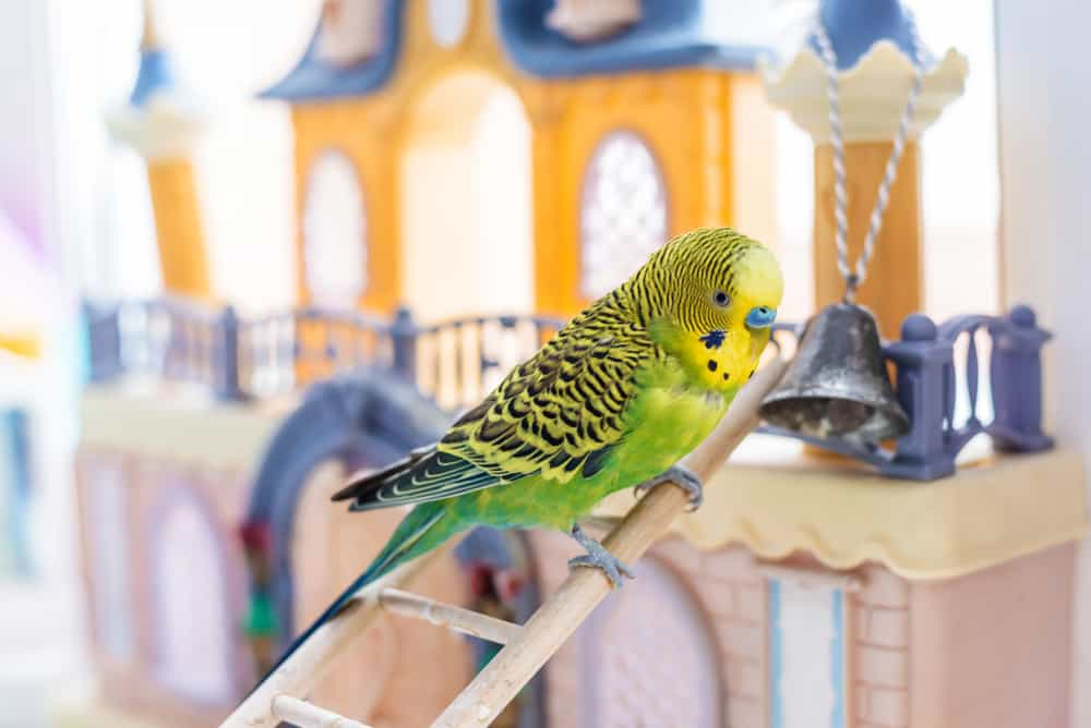 rehoming parrots uk