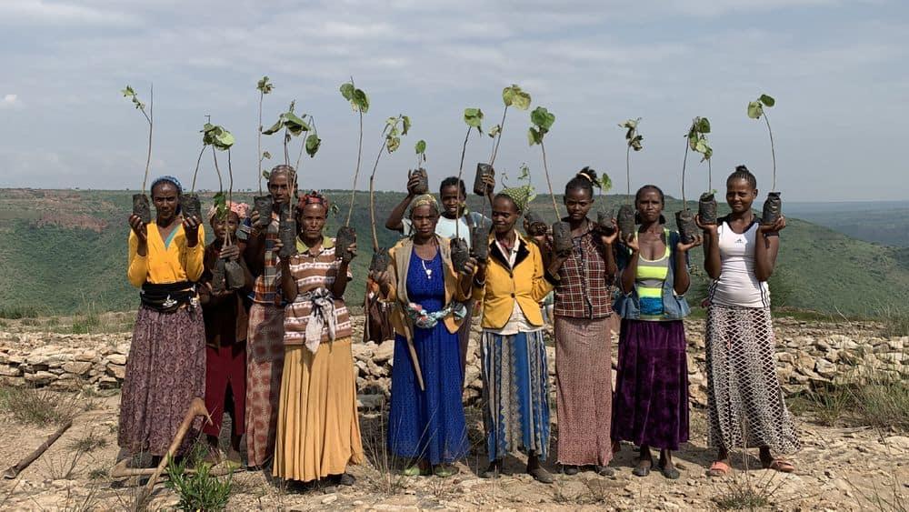 tree planting charity