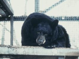 bear boy justin barker