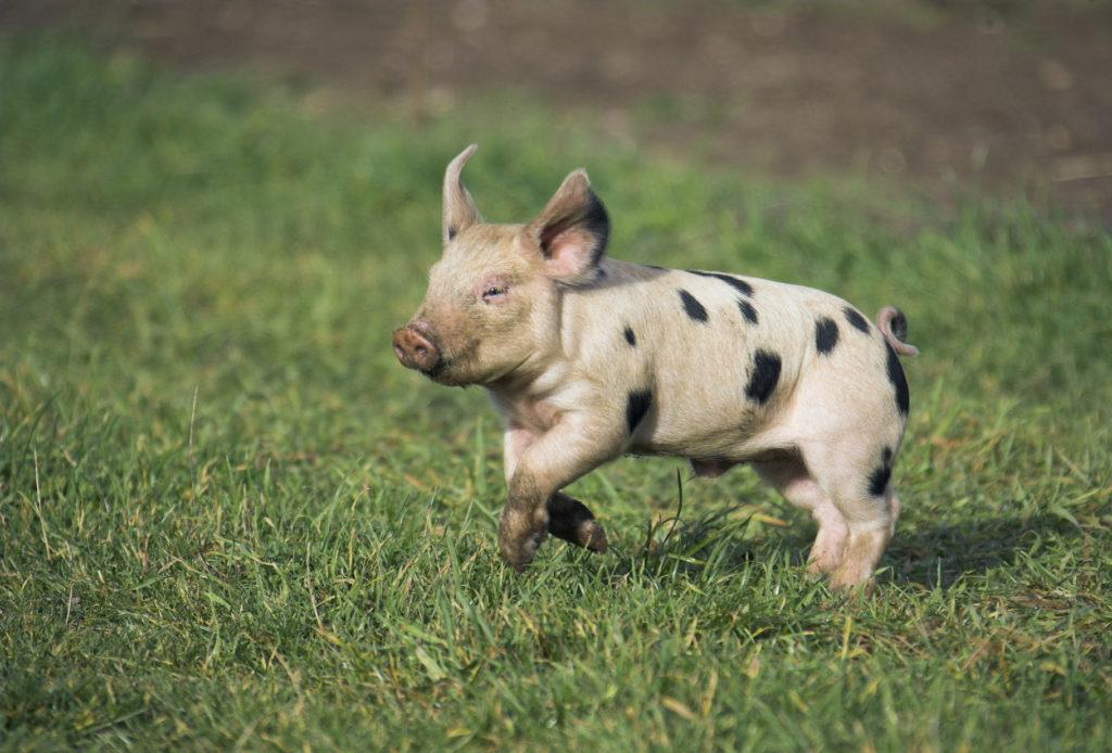 animal rights uk