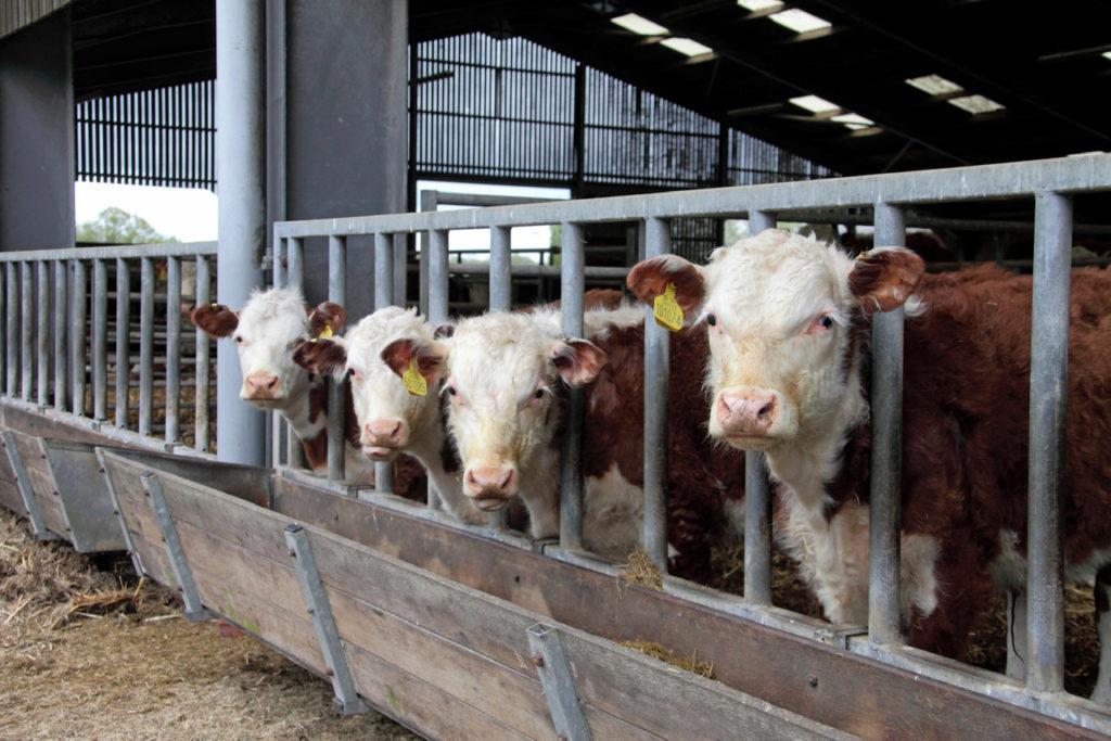 animal sentience bill uk