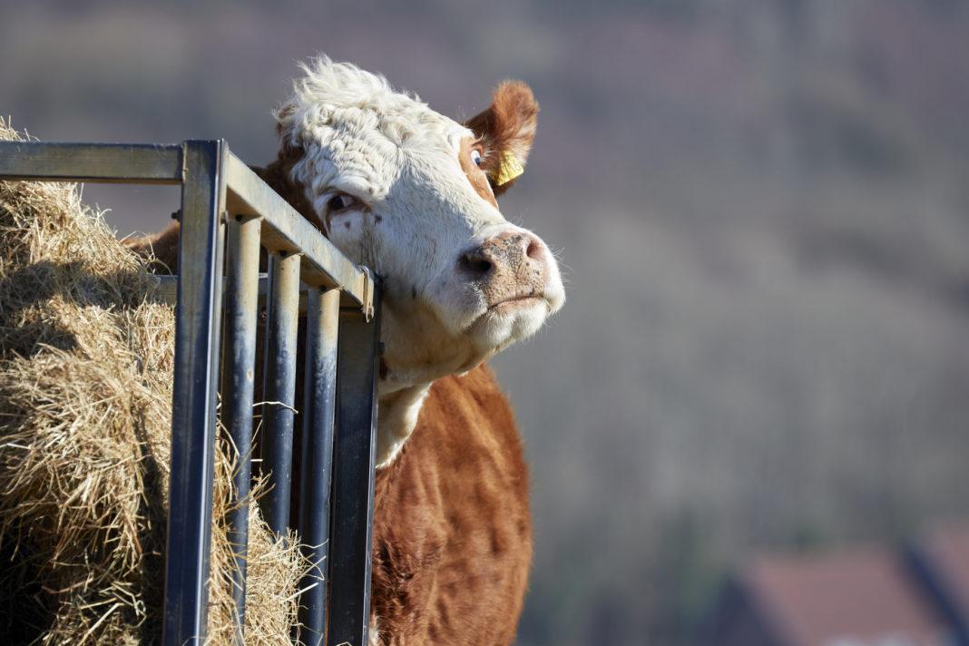 animal sentience bill