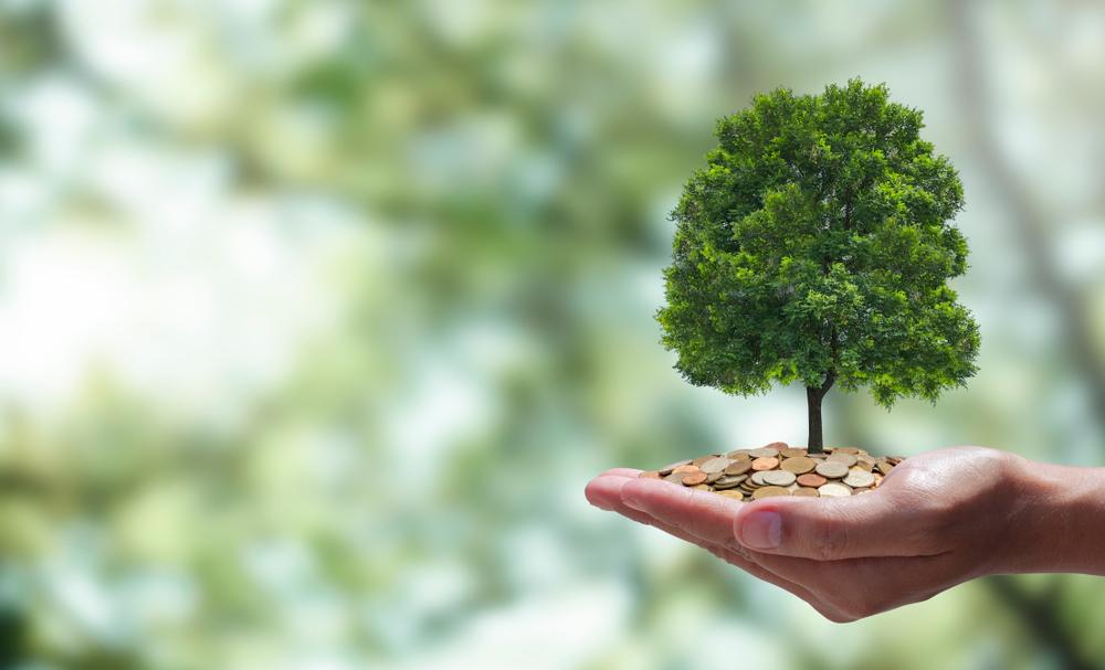 carbon offset sme
