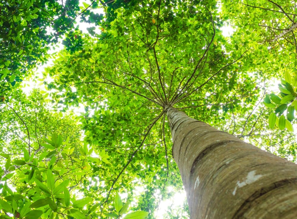 carbon offsetting food security