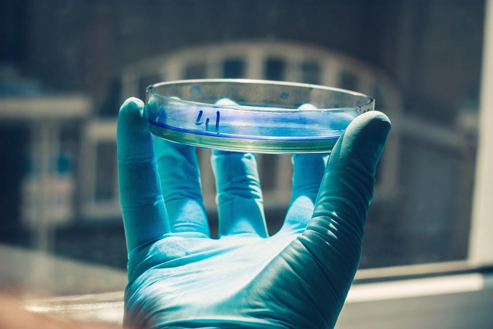 alternatives to animal testing