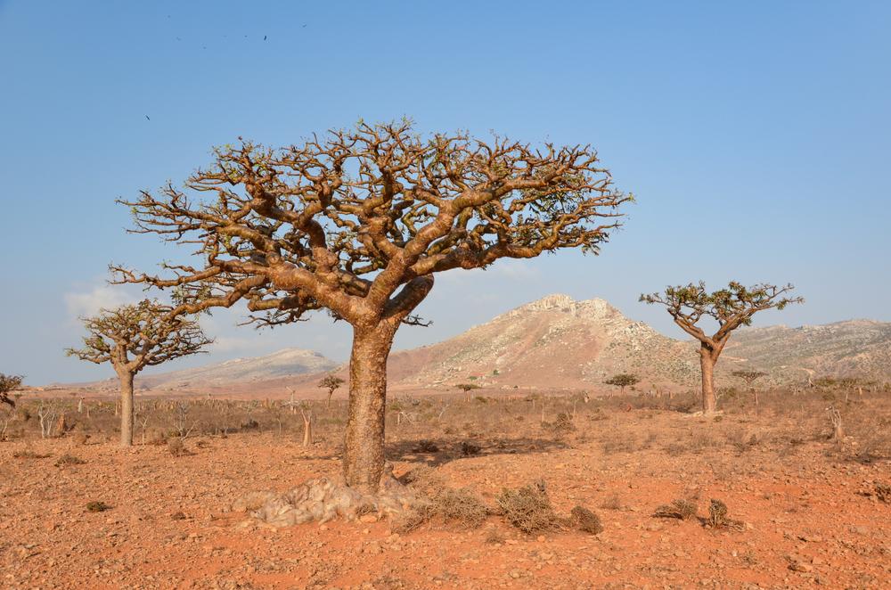 yemen climate change