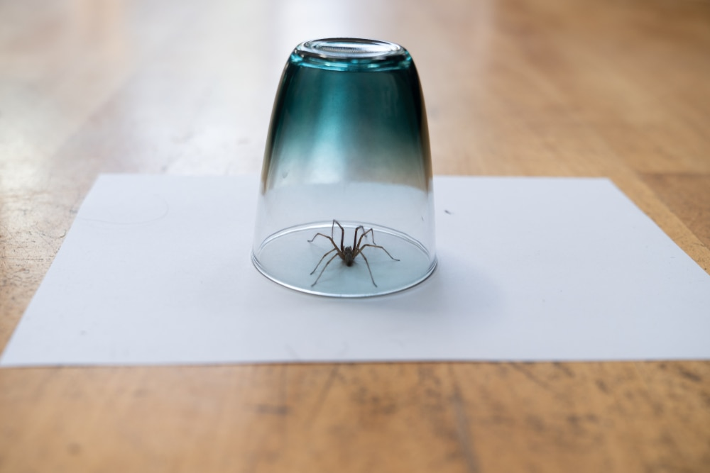 insect inside glass